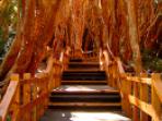 Bariloche Bosque de Arrayanes